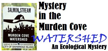 Mystery in the Murden Cove Watershed